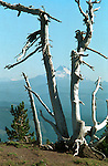 Picture taken from Mt. Hood, Oregon looking at Mt. Adams Washington, Mt. Adams, Mt. Hood, Cascade Range, Cascade Volcanic Arc, Mount Adams Wilderness, Yakama Nation, State of Washington, Pacific Crest Trail,Bridge of the Gods, Columbia River, Pahto, La-wa-la-clough, Lewis and Clark Expedition, Hood River Valley, Fine Art Photography, photographs fulfill a creative vision of the artist fine art photography, buy art, limited edition print, buy fine art, travel photography, photo art, prints, fine art,<br /> <br /> FINE ART PHOTOGRAPHY FOR SALE,<br /> SEE CART FOR PRICING. Fine Art Photography by Ron Bennett, Fine Art, Fine Art photography, Art Photography, Copyright RonBennettPhotography.com ©