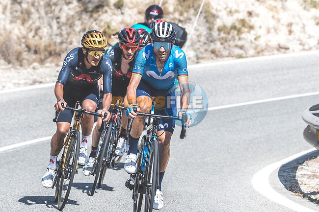 Alejandro Valverde (ESP) Movistar Team, Olympic Champion Richard Carapaz (ECU) and Adam Yates (GBR) Ineos Grenadiers just before Valverde crashes out of the race during Stage 7 of La Vuelta d'Espana 2021, running 152km from Gandia to Balcon de Alicante, Spain. 20th August 2021.     <br /> Picture: Cxcling   Cyclefile<br /> <br /> All photos usage must carry mandatory copyright credit (© Cyclefile   Cxcling)