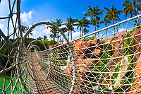 Rope hanging bridge over a lagoon and red rocks with waterfalls and palm trees in the background on Paradise island, Bahamas