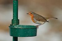 Rotkehlchen, an der Vogelfütterung, Fütterung im Winter bei Schnee, mit Futter gefüllte Futterschale, Winterfütterung, Erithacus rubecula, robin