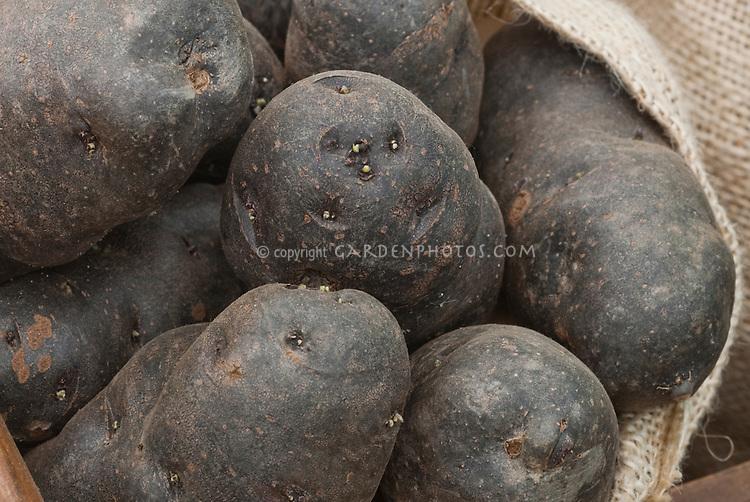 Black skinned potatoes Portland Black