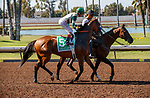 ARCADIA, CA  JULY 5:  #5 Gamine, ridden by John Velazquez, in the post parade before the Great Lady M Stakes (Grade ll) on July 5, 2021 at Los Alamitos Race Course in Los Alamitos, CA.  (Photo by Casey Pnillips/ Eclipse Sportswire/ CSM)