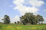 Ein Fakhura in the Golan Heights