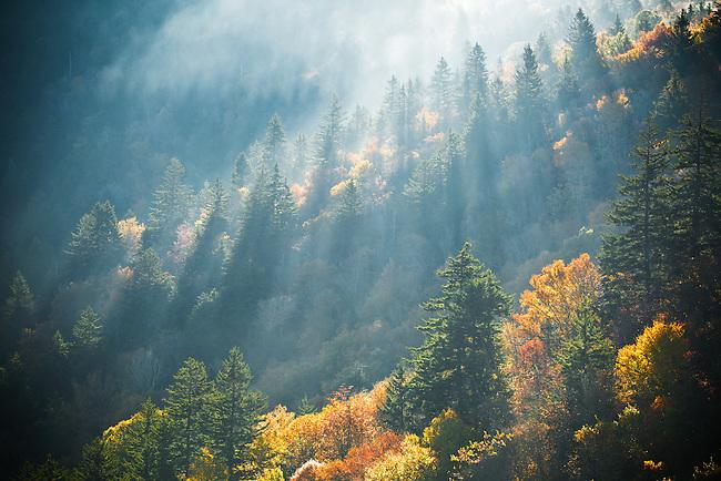 Autumn light on forest, Blue Ridge Parkway