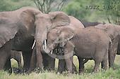 Dr. Xiong, ANIMALS, wildlife, photos, AUJX117,#a#