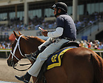 HALLANDALE BEACH, FL - APRIL 01: Scenes from Florida Derby Day at Gulfstream Park on April 01, 2017 in Hallandale Beach, Florida. (Photo by Carson Dennis/Eclipse Sportswire/Getty Images)