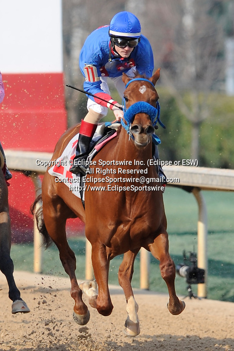 #11 Sugar Shock with jockey Channing Hill aboard during the running of the Honeybee Stakes (Grade III) at Oaklawn Park in Hot Springs, Arkansas-USA on March 8, 2014. (Credit Image: © Justin Manning/Eclipse/ZUMAPRESS.com)