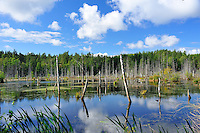 S - Smaland - Store Mosse National Park<br /> <br /> Full size 69,2 MB
