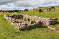 Northumberland, England, UK.  Brocolitia Mithraic Temple (Carrawburgh Temple of Mithras).  Hadrian's Wall Footpath.