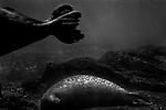 """Sirens""<br /> Seal Enclosure<br /> Coney Island Aquarium<br /> Coney Island , NY<br /> From the ""Captivity"" series<br /> © Thierry Gourjon-Bieltvedt"
