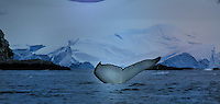 Yalour Islands<br /> Finnwal - Fin Whale<br /> <br /> Full Size: 36,3 MB