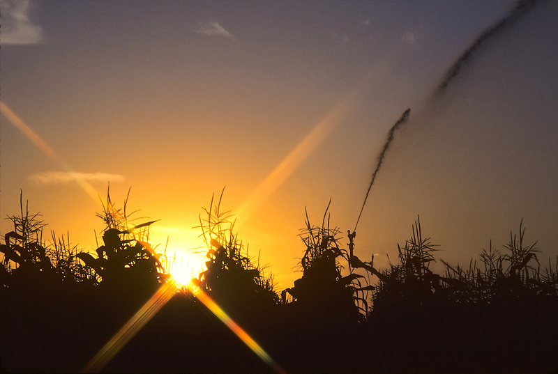 Sunrise, irrigation of corn. Near Irish Bend, Oregon.