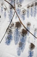trees, shadows, Walpole, MA aerial