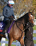 November 03, 2020: Sistercharlie, trained by trainer Chad C. Brown, exercises in preparation for the Breeders' Cup Filly & Mare Turf at Keeneland Racetrack in Lexington, Kentucky on November 3, 2020.