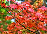 OCT 08 Autumn Colours in Sussex, UK