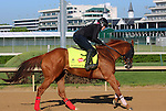 LOUISVILLE, KY - APRIL 24: Whitmore (Pleasantly Perfect x Melody's Song, by Scat Daddy) gallops on track at Churchill Downs in preparation for the Kentucky Derby. Owner Robert V. LaPenta, Harry T. Rosenblum, and Southern Springs Stables. (Photo by Mary M. Meek/Eclipse Sportswire/Getty Images)