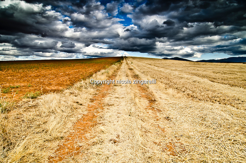 Cropped wheat field in the spanish meseta with cloudy sky and strong color contrast. Riaza, Soria, Spain