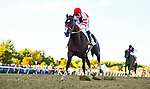 BENSALEM, PA -SEPTEMBER 24: Songbird #5 (red cap), ridden by Mike Smith, wins the Cotillion Stakes on Pennsylvania Derby Day at Parx Racing and Casino on September 24, 2016 in Bensalem, PA. (Photo by Scott Serio/Eclipse Sportswire/Getty Images)