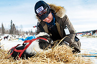 Vetenarian, Kimbely McCreedy looks at #45 Seth Barnes's dog in the morning at Finger Lake checkpoint during the 2019 Iditarod.<br /> <br /> Photo by Jeff Schultz/  (C) 2019  ALL RIGHTS RESERVED