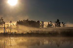 A misty morning sunrise in northern Wisconsin.