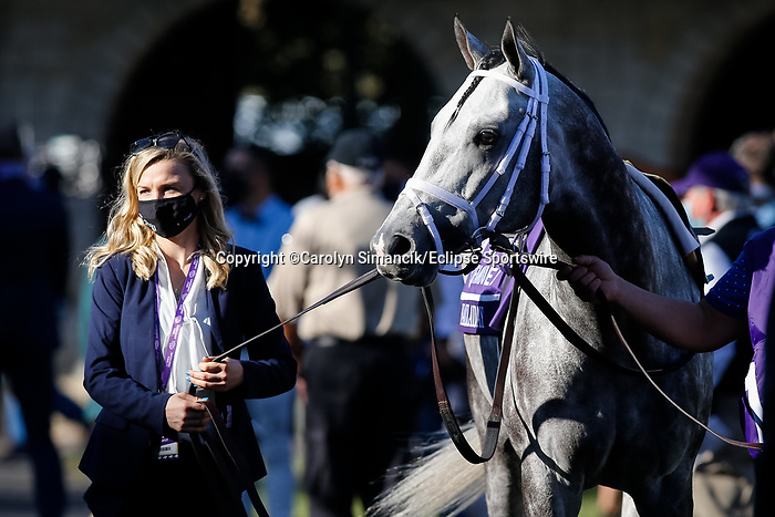 November 7, 2020 : Order of Australia, ridden by Pierre-Charles Boudot, walks the paddock before the FanDuel Mile presented by PDJF on Breeders' Cup Championship Saturday at Keeneland Race Course in Lexington, Kentucky on November 7, 2020. Carolyn Simancik/Breeders' Cup/Eclipse Sportswire/CSM