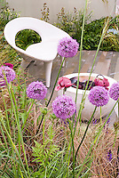 Small Garden patio and BBQ firepit. Spiky Allium flower globe balls, poppy papaver, ornamental grass, matching white furniture chair and firepit, deck, wall, lots of textures and shapes for big impact in small space