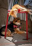 Italien, Kampanien, Sorrentinische Halbinsel, Amalfikueste, Positano: zwei Hunde ruhen in der Mittagshitze | Italy, Campania, Sorrento Peninsula, Amalfi Coast, Positano: two dogs sleeping