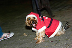 Dog dressed in Santa costume at the Christmas lights turn on parade through Swansea City Centre..