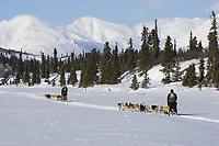 Ed Iten & Mitch Seaveys team mushes along trail on Puntilla Lake outside Rainy Pass Chkpt 2006 Iditarod AK
