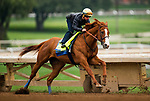 ARCADIA, CA - APRIL 02: Justify with Drayden Van Dyke complete final preparations for the Santa Anita Derby at Santa Anita Park on April 02, 2018 in Arcadia, California. (Photo by Alex Evers/Eclipse Sportswire/Getty Images)