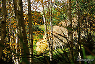 Image Ref: DR019<br /> Location: RJ Hamer Arboretum<br /> Date: 13th April 2014
