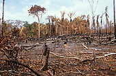 Roraima State, Brazil. Rainforest land cleared and burnt for agriculture, leaving stumps and charred tree trunks.