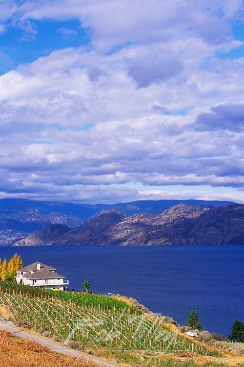 Vineyard on Okanagan Lake, BC
