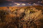 Threatening skies provide a dramatic backdrop to beautifully lit sagebrush
