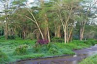 Early morning, Lake Nakuru National Park, Kenya.  2012 has been a very wet year here.