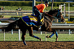 ARCADIA, CA  OCTOBER 30: Breeders' Cup Classic entrant Mongolian Groom, trained by Enebish Ganbat, exercises in preparation for the Breeders' Cup World Championships at Santa Anita Park in Arcadia, California on October 30, 2019.  (Photo by Casey Phillips/Eclipse Sportswire/CSM)