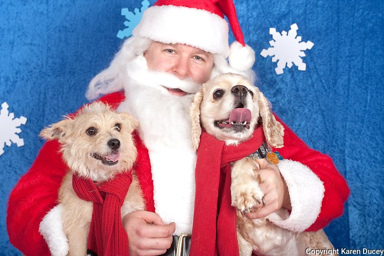 Dogs are photographed with Santa at a fundraiser for Dogs Deserve Better at Pet Pros in Redmond, WA on December 12, 2010. (photo by Karen Ducey)Angus and Klondike (not sure which is which) are photographed with Santa at a fundraiser for Dogs Deserve Better at Pet Pros in Redmond, WA on December 12, 2010. (photo by Karen Ducey)