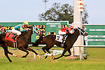 January 16, 2016:  Chocolate Ride with Florent Geroux up wins the Col. E.R. Bradley Handicap race at the Fairgrounds race course in New Orleans Louisiana. Steve Dalmado/ESW/CSM