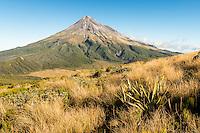 Afternoon light on alpine tussock field with Taranaki, Mount Egmont in background, Egmont National Park, North Island, New Zealand, NZ