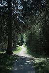Germany, Bavaria, Upper Bavaria, Werdenfelser Land, above Mittenwald: hiking trail between Kranzberg mountain and Lake Lautersee | Deutschland, Bayern, Oberbayern, Werdenfelser Land, oberhalb von Mittenwald: Wanderweg zwischen Kranzberg und Lautersee