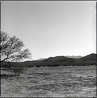 Single tree in dry lake bed<br />