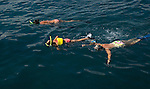 Vacationers snorkling off Maui, Hawaii
