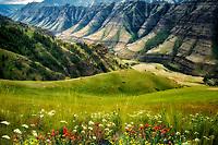 Wildflowers and Imnaha Canyon. Hells Canyon National Recreation Area, Oregon