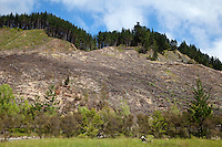Silviculture.  Hillside Harvested of Trees.  East Cape, North island, New Zealand, from Highway 35.