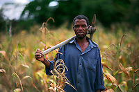 60 year old Hudson works a field of maize....