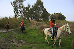 Israel, Sharon region, horse riding in Park Hasharon