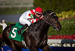 HALLANDALE FL - FEBRUARY 27: Go Around #5 with Florent Geroux  is victorious in an Allowance Race at Gulfstream Park on February 27, 2016 in Hallandale, Florida.(Photo by Alex Evers/Eclipse Sportswire/Getty Images)