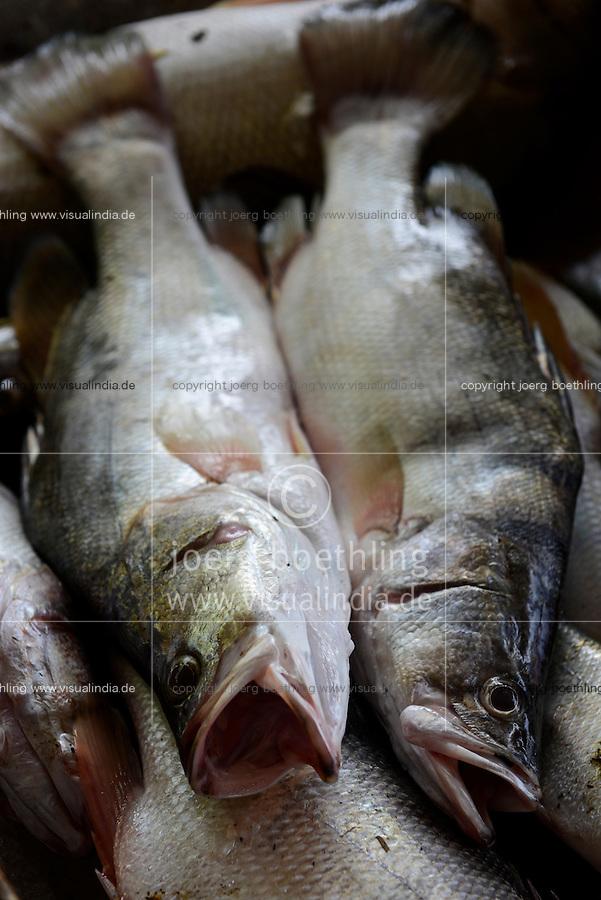 KENYA Kisumu, community managed fishing village and resort Dunga Beach at Lake Victoria, Victoria or Nile perch / KENIA Kisumu, von der Dorfgemeinde selbst verwaltetes Fischerdorf und Ressort Dunga Beach am Viktoria See, Viktoriabarsch