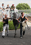 4 July 2010: INFORMED DECISION leaves the winner's circle after winning the 22nd running of the G3 Chicago Handicap at Arlington Park in Arlington Heights, Illinois.