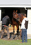 October 23, 2015: Smooth Roller, trained by Victor Garcia, and owned by Lucky Charm Stable, entered in the Breeder's Cup Classic Grade 1 $5,000,000.  Candice Chavez/ESW/CSM